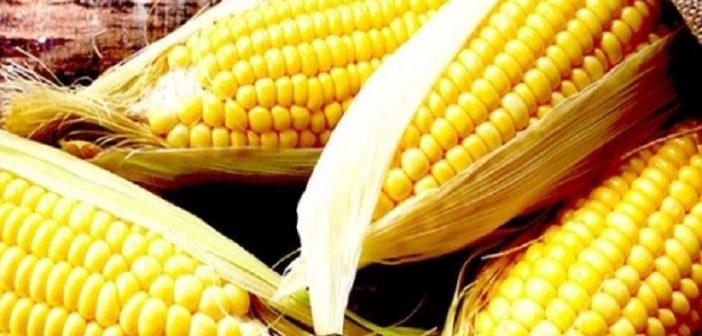 Anvisa aponta que mais da metade dos vegetais está contaminada com veneno no Brasil