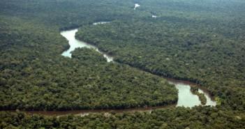 Banco francês deixará de financiar empresas que desmatam Amazônia e Cerrado no Brasil