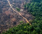Desmatamento da Amazônia determina preço de cerveja da Ambev